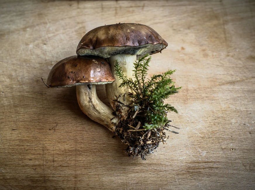 Just Mushrooms? No, There Is A Long List To The Variety – Buy Shrooms Online