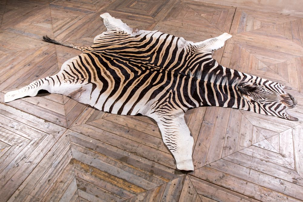 Top Things To Know About Zebra rug